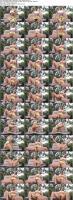 178951346_surecakescollection_manyvids_secret-garden-squirt_s.jpg